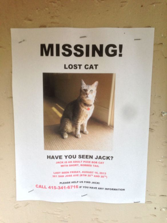MISSING! Lost Cat!